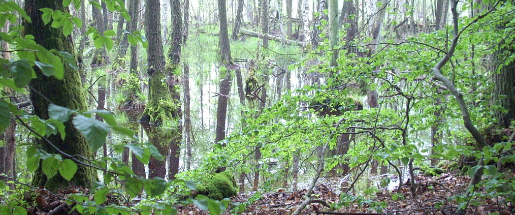 Im Wald gefangen